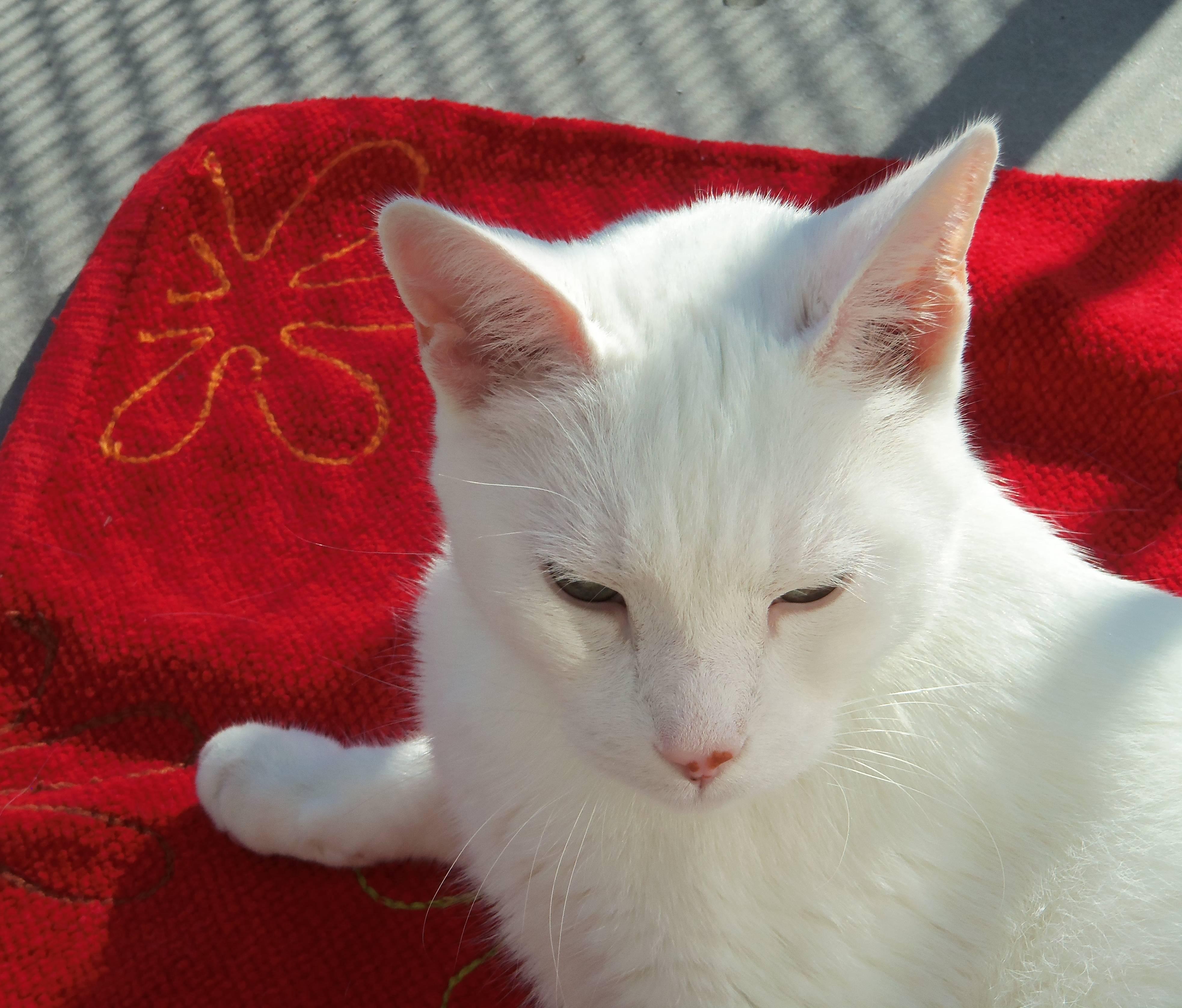 Démarche artistique détaillée  de tableau sur mon chat blanc technique mixte